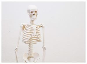 ミルト骨格標本